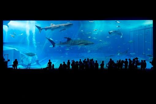 aquarium-725798__340