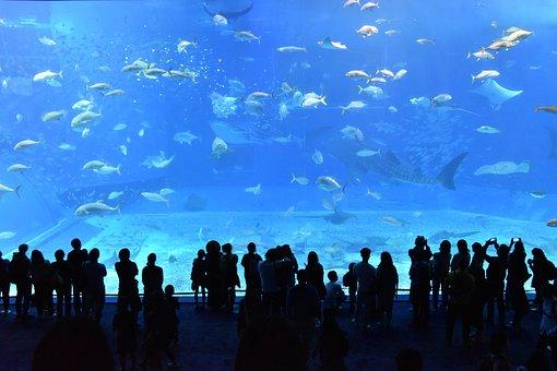 churaumi-aquarium-2407812__340