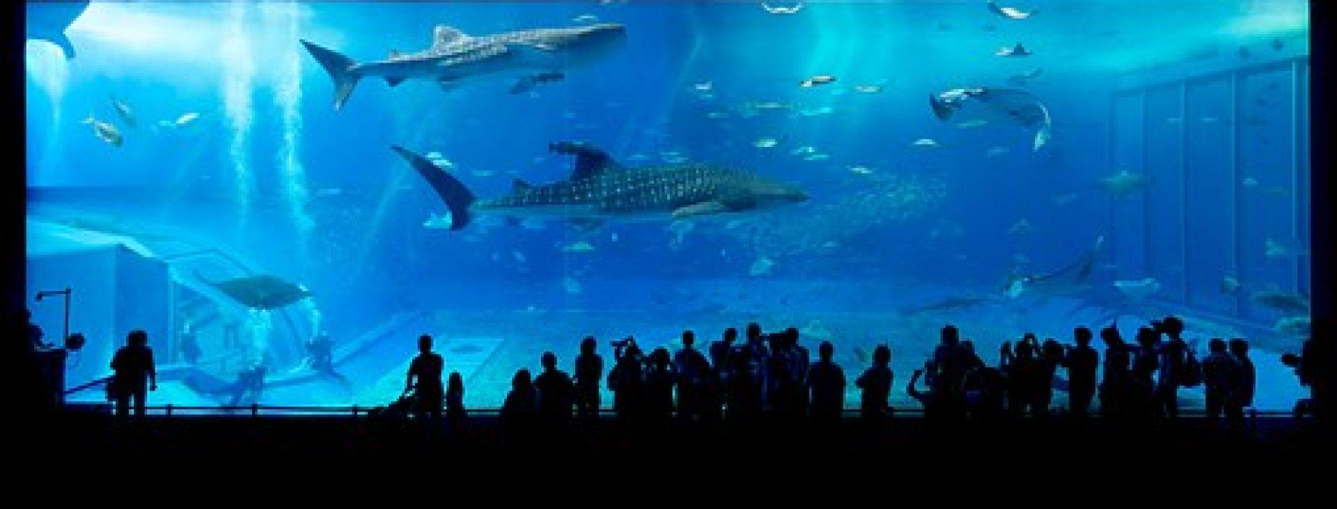 cropped-aquarium-725798__340.jpg