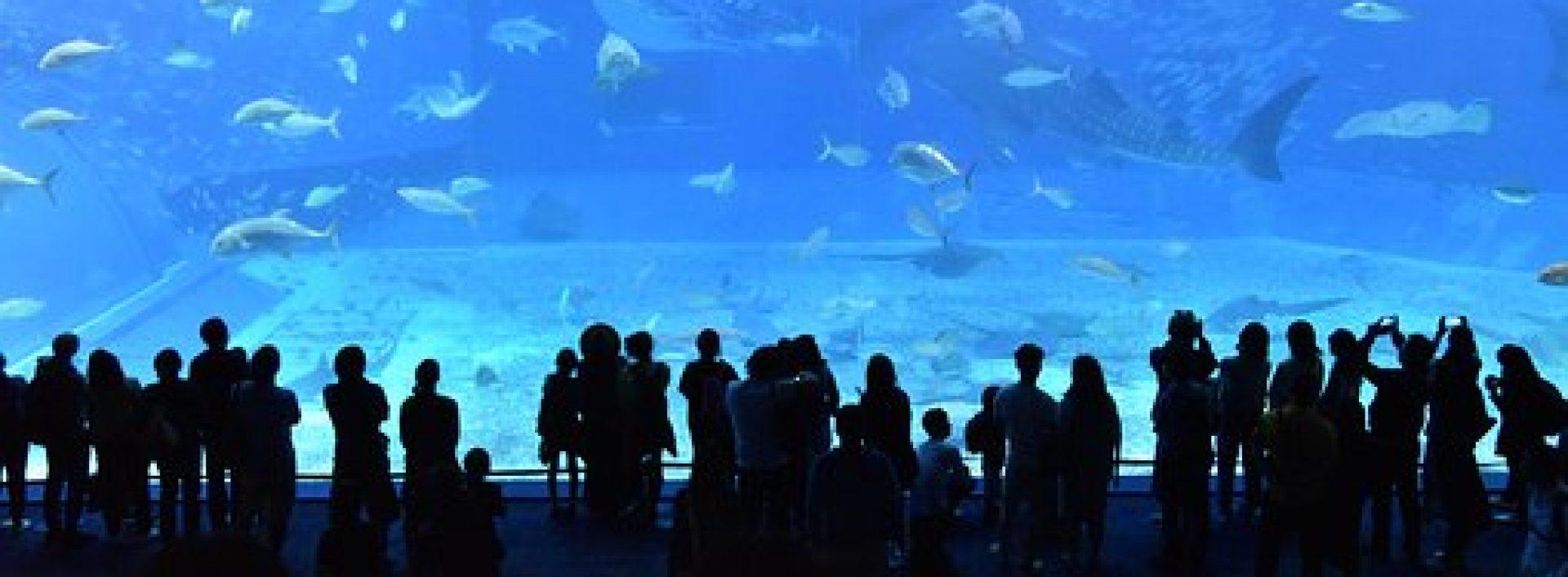 cropped-churaumi-aquarium-2407812__340-1.jpg