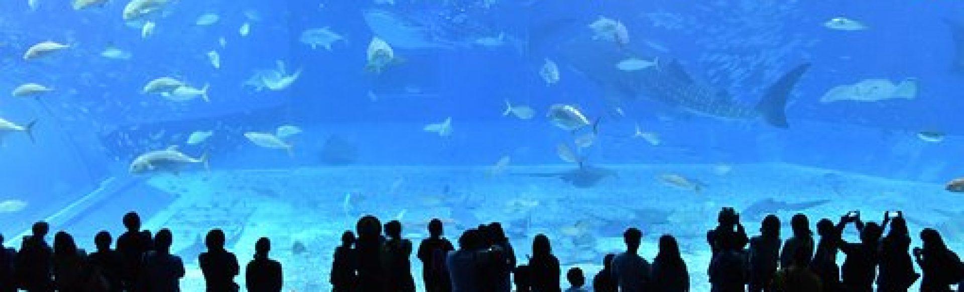 cropped-churaumi-aquarium-2407812__340.jpg